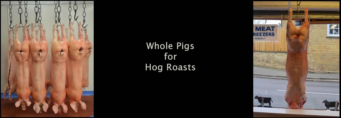 hog roast whole pigs